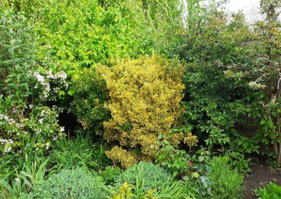 The Wild and Secret Garden